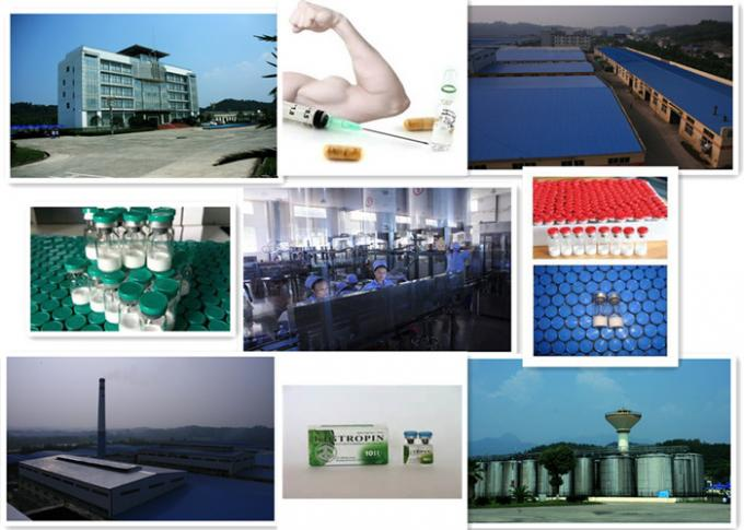 Bodybuilding Growth Hormone Peptides , Steroids Human Growth Hormone For Sexual Dysfunction