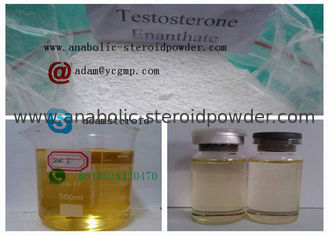 China Raw Hormone Powders Testosterone Enanthate 250mg / Ml supplier
