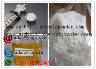 China CAS 57-85-2 Injectable Testosterone Steroids Powder Testosterone Propionate supplier