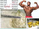 China 99% Purity Muscle Building Trenbolone Steroid  Trenbolone Enanthate USP31 Standard factory