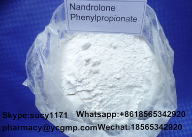 China 99% Purity Nandrolone Steroid  Nandrolone Phenylpropionate For Muscle Gaining distributor
