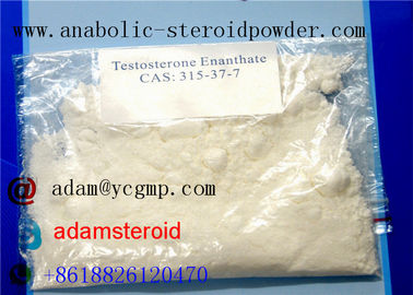 China Steroid Raw Powder Testosterone Enanthate Muscle Strength 315-37-7 With Fast Delivery distributor