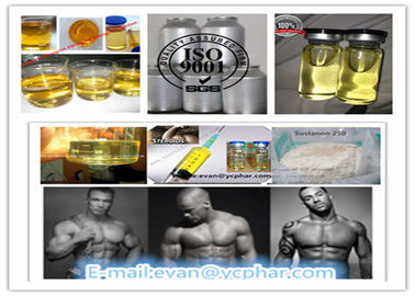 China Sustanon 200mg / Ml 300mg / Ml Injectable Testosterone Steroids , Testosterone Steroid Hormone distributor
