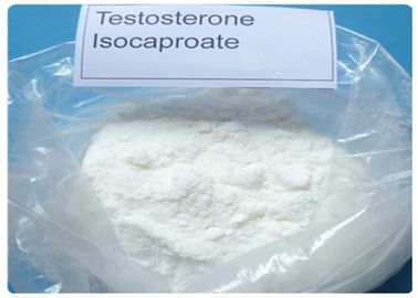 China 15262-86-9 Injectable Testosterone Steroids Testosterone Isocaproate For Bodybuiilding distributor