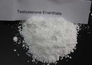 China Strongest Anabolic and Androgenic Raw Steroid Powders Test Cyp Testosterone Cypionate Ester distributor